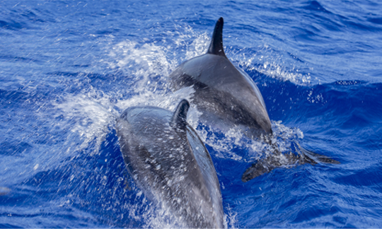 Whale & Dolphin Boat Excursions